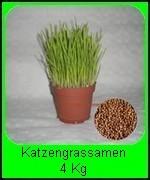 Die 8 x 500g Katzengras Samen (Avena sativa) = 100000* Samen reichen für ca. 160 Pflanztöpfe und ist billiger als Fertiggras.