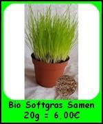 Die Bio Katzengras Softgras Samen 20g (Lolium perenne) sind hochkeimfähig und ergeben ein super weiches Katzengras.