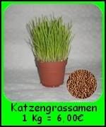 Die Katzengras Samen (Avena sativa) 25000* Samen = 2 x 500 g reichen für ca. 40 Blumentöpfe und es ist billiger als das einfache, fertiges Katzengras.