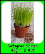 Die Katzengras Softgras Samen 40g (Lolium perenne) sind hochkeimfähig und ergeben ein super weiches Katzengras in ca. 20 Töpfe